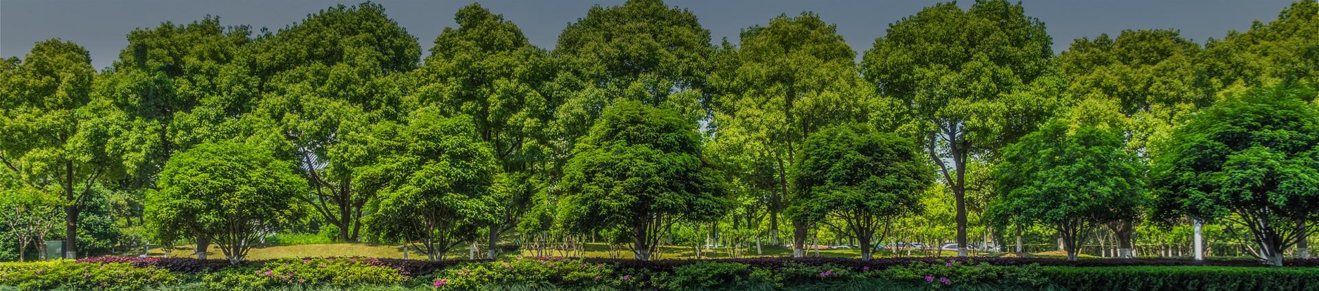 Drzewa w parku - Banner
